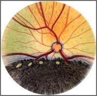 Gatto: Immagine schematica del fondo dell'occhio.