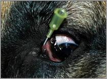 Incannulamento del punto lacrimale superiore.