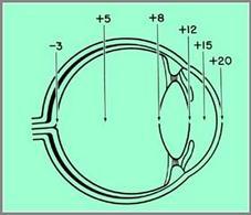 Numero della lente per l'osservazione delle varie strutture.