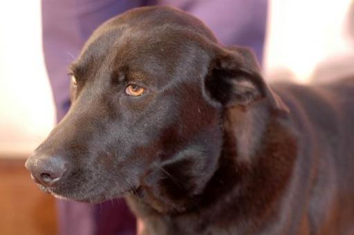 Cane met.: tumefazione latero-cervicale da cisti salivare a partenza dalla ghiandola sottomandibolare.