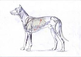 Area ascoltazione cane (vedi testo).
