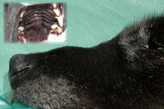 Modificazione del profilo del naso (e del palato duro) da carcinoma delle cavità nasali.
