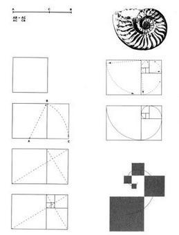 Sezione aurea di un segmento. Costruzione del rettangolo aureo e della relativa spirale