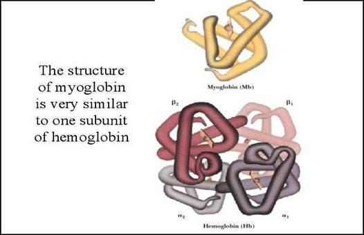 Protein formed by