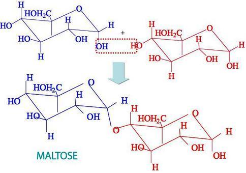 α-D-glucopiranosil-4-D-glucopiranose