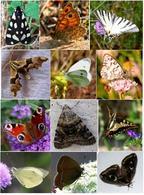 Diversità tra i lepidotteri. Foto di Domenico Fulgione.
