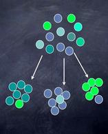 Nell'immagine i pallini rappresentano gli individui di una popolazione e i diversi colori la variabilità di un carattere entro essa. In alto la popolazione parentale e in basso le popolazioni che da essa possono derivare Disegno di Domenico Fulgione.