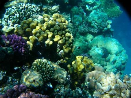 Benthos marino con spugne. foto di Giuliana Russo.