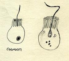 Coanociti. Disegno di Daniela Rippa.