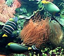 Anemone e altri organismi – Foto di Domenico Fulgione.