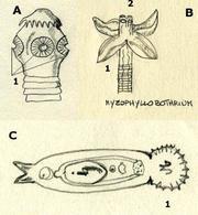 Adattamenti morfologici di alcuni parassiti. A) Tenia con 4 ventose principali (1); Myzophyllobothrium con lembi adesivi (1) e piccole ventose accessorie (2); Monogenea con Opisthaptor (1)
