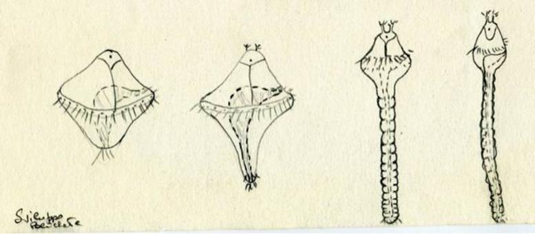 Sviluppo di un polichete primitivo: da sinistra la larva trocofora simile ad una trottola, che maturando sviluppa un capo ed allunga il corpo fino ad assumere gradualmente i caratteri di un adulto. Disegno di Daniela Rippa.