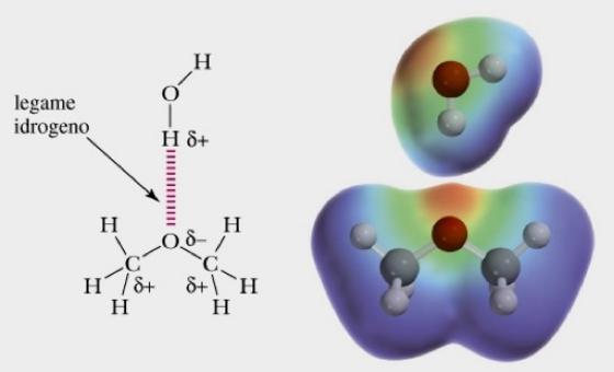 Gli eteri sono accettori di legami idrogeno ma non donatori. Ciò facilita la loro solubilità in acqua. Fonte: Brown Poon, Introduzione alla Chimica Organica, EdiSES