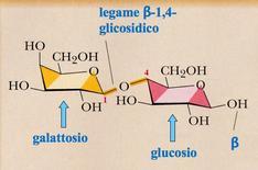 Lattosio. Fonte: modificata da Brown Poon, Introduzione alla Chimica Organica, EdiSES