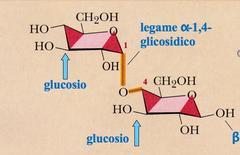 Maltosio. Fonte: modificata da Brown Poon, Introduzione alla Chimica Organica, EdiSES