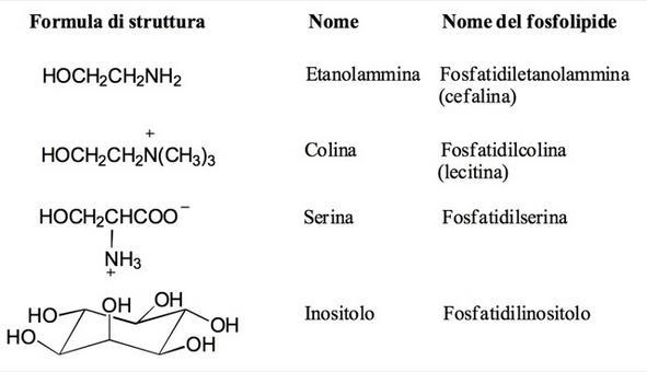 Alcoli trovati nei fosfolipidi