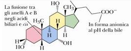 Acido colico. Fonte: modificata da Brown Poon, Introduzione alla Chimica Organica, EdiSES