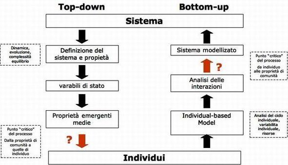 Confronto tra i due approcci modellistici IBM e CM in funzione delle due diverse strategie Top down e bottom-up