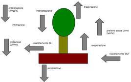 I principale processi del sistema Suolo-Pianta-Atmosfera
