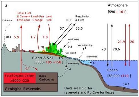 Schema del ciclo del carbonio (in nero flussi pre-industriali, in rosso le perturbazioni)