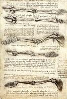Leonardo da Vinci, Movimento del braccio. Fonte: Wikipedia