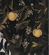 Botticelli, Primavera, particolare. Fonte: Thais