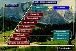 I sistemi naturali hanno tutti una struttura a più livelli di organizzazione. Fonte: Sistemi complessi