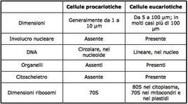 Nella tabella sono riportate le principali caratteristiche delle cellule procariote ed eucariote