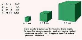 Rapporto superficie volume in un cubo
