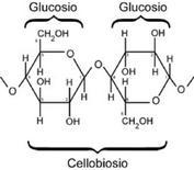 Cellobiosio, unità di base della cellulosa. Fonte: Wikipedia