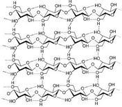 Microfibrilla di cellulosa. Fonte: Wikimedia Commons
