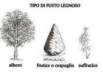 Tipo di fusti legnosi. Fonte: Istituto Serpieri