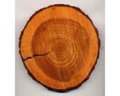 Tronco tagliato dove sono visibili gli anelli di crescita. Fonte: Atlante di Botanica