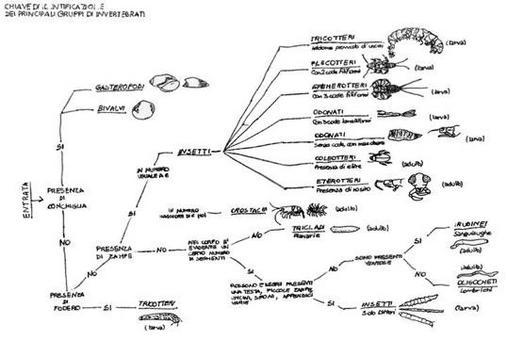 Chiave di identificazione dei principali gruppi di invertebrati