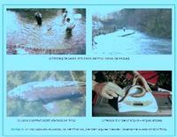 Caratterizzazione del bioindicatore ittico