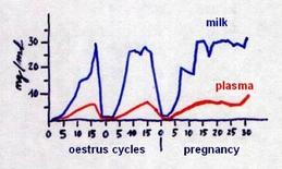 Pattern of progesterone level during oestrus and pregnancy.