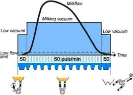 Pattern of milk flow from cow's udder. From: DeLaval
