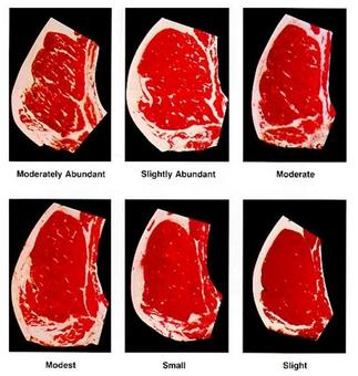 Different grades of marbling. From: United States Department of Agriculture (USDA), Meat Quality Grades.