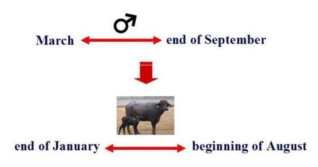 Out-of-season breeding scheme.