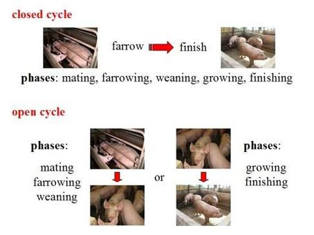 Description of the pig production systems.