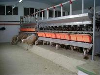 Frontal exit milking parlor.