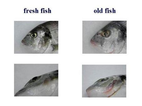 Main signs of fish freshness.