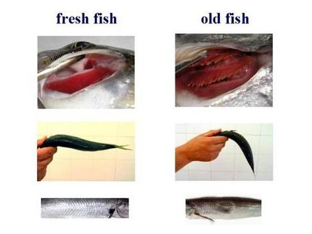 Main signs of fish freshness. From: Bellotti P., U.O. Cardiologia ASL 2 Savonese, modified.