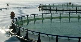 Farm equipped with floating cages. From: L. Flageul, Commissione Europea Pesca.