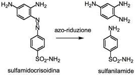 La sulfamidicrisoidina libera in vivo la sulfanilamide.