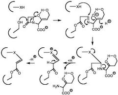 Inibizione di una β-lattamasi batterica da parte dell'acido clavulanico.