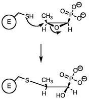 Reazione della fosfomicina con una cisteina dell'enolpiruvil trasferasi.