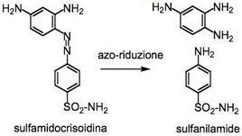 Biotrasformazione del profarmaco sulfamidocrisoidina in sulfanilamide.