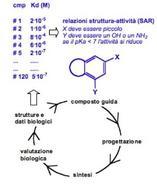 Le relazioni struttura-attività rispetto al ciclo di ottimizzazione del composto  guida.