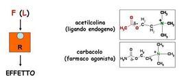 Fig. 6 Il carbacolo è un esempio di farmaco agonista